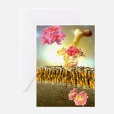 Growth hormone receptor, molecular m Greeting Card
