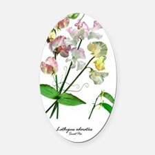 Sweet Pea (Lathyrus odorata) Oval Car Magnet