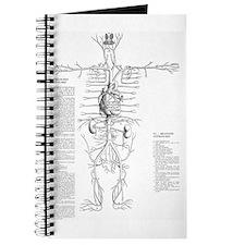 Circulatory system, 16th century Journal