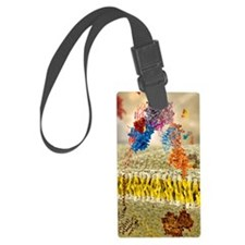 Insulin receptor, molecular mode Luggage Tag