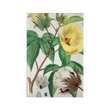 Pima cotton flowers, 19th century Rectangle Magnet