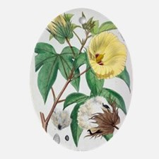 Pima cotton flowers, 19th century Oval Ornament