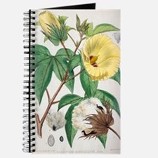 Pima cotton flowers, 19th century Journal