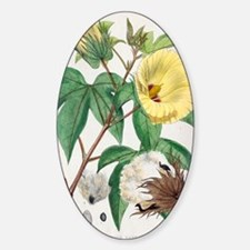 Pima cotton flowers, 19th century Sticker (Oval)
