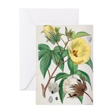 Pima cotton flowers, 19th century Greeting Card