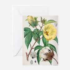 Pima cotton flowers, 19th century Greeting Card