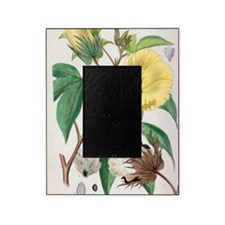 Pima cotton flowers, 19th century Picture Frame