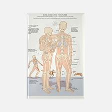 Skeletal figures, artwork Rectangle Magnet