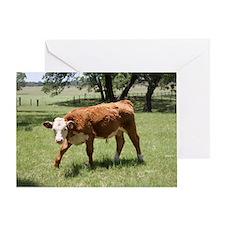 Hereford Calf at the LBJ Ranch Greeting Card