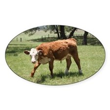 Hereford Calf at the LBJ Ranch Decal