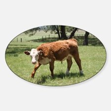 Hereford Calf at the LBJ Ranch Sticker (Oval)