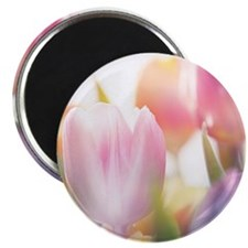 Beautiful Tulips Magnet
