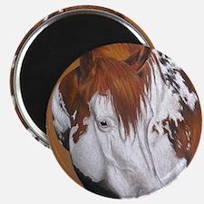 overo stallion Magnet