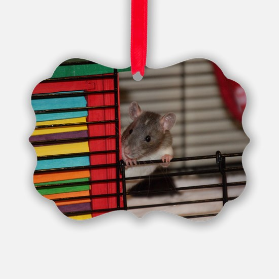 IMG_3192 baby hooded rat Ornament