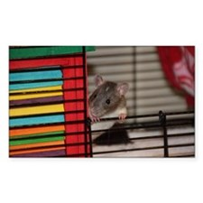 IMG_3192 baby hooded rat Decal