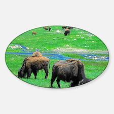 Buffalo 12X9 Sticker (Oval)
