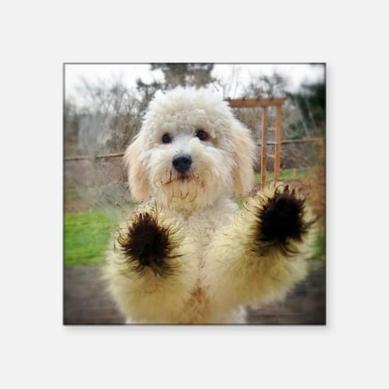 "Goldendoodle Puppy Dog Square Sticker 3"" x 3"""