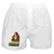 English_Bull_Terrier_Pirate_canvas_me Boxer Shorts