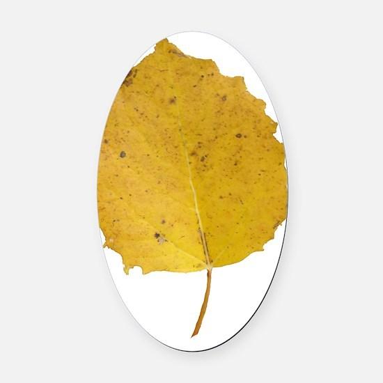 Golden Aspen Leaf Oval Car Magnet