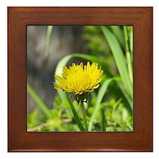 One Dandelion Framed Tile