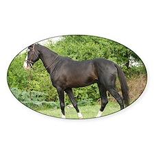 Humayun Marwari Stallion of Virendr Decal