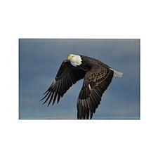 full crop eagle Rectangle Magnet
