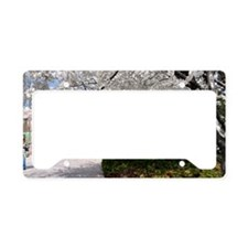 Cherry Blossoms 14X6 License Plate Holder