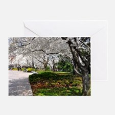 Cherry Blossoms 10X9 Greeting Card