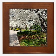 Cherry Blossoms 10X9 Framed Tile