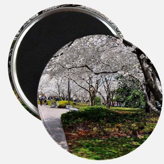 Cherry Blossoms 10X9 Magnet
