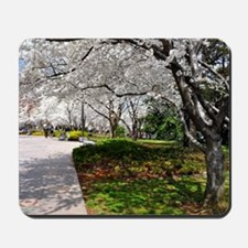 Cherry Blossoms 10X9 Mousepad