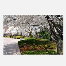 Cherry Blossoms 10X9 Postcards (Package of 8)