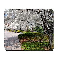 Cherry Blossoms 17X15 Mousepad