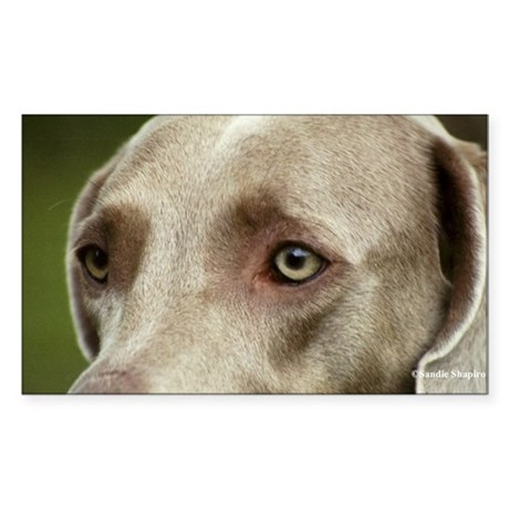 Weimaraner -The Eyes Have It Rectangle Sticker