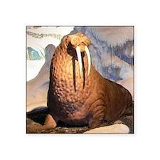 """walrus Square Sticker 3"""" x 3"""""""