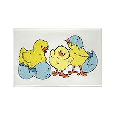 3 Chicks Rectangle Magnet