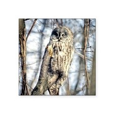 "Great Gray Owl Square Sticker 3"" x 3"""