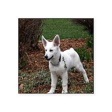 "White Shepherd Pup Square Sticker 3"" x 3"""