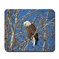 Magnificent Bald Eagle Mousepad
