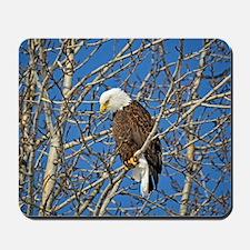 Magnificent Bald Eagle Mousepad