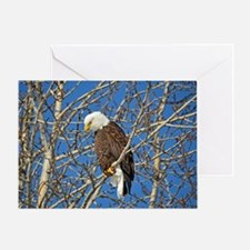 Magnificent Bald Eagle Greeting Card
