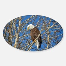 Magnificent Bald Eagle Decal