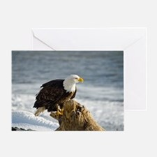 Bald Eagle Homer Alaska Greeting Card