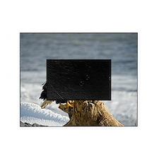 Bald Eagle Homer Alaska Picture Frame