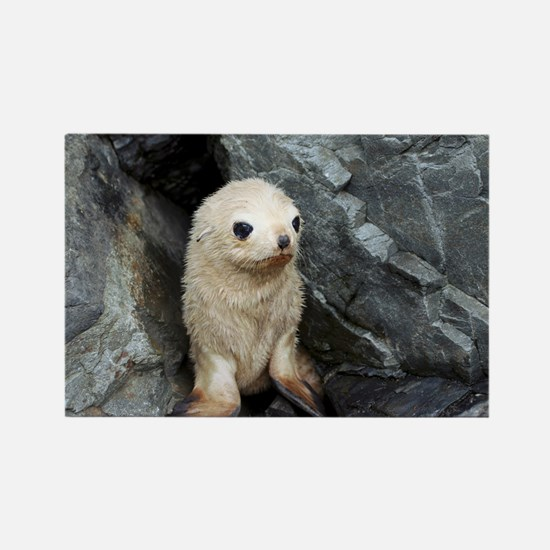 Antarctic fur seal blonde pup Rectangle Magnet