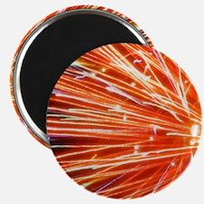 Catherine Wheel Cat Forsley Designs Magnet