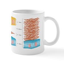 Bacterial cell wall comparison, artwork Mug