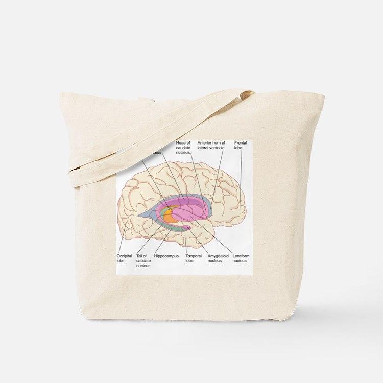Basal ganglia, artwork Tote Bag