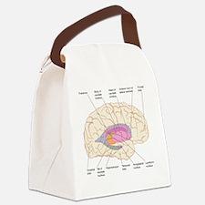 Basal ganglia, artwork Canvas Lunch Bag