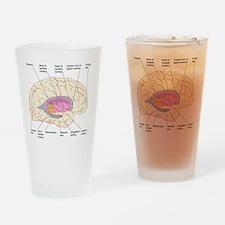 Basal ganglia, artwork Drinking Glass